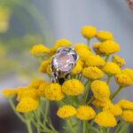 Кольцо из серебра с ограненным розовым кварцем