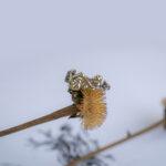 Золотое кольцо с листьями